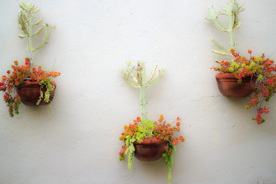 Succulents in hanging baskets