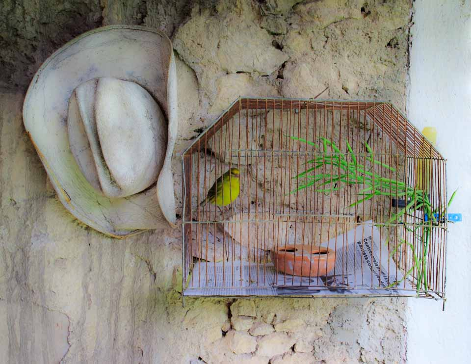 Tweety bird in a cage with a man's hat